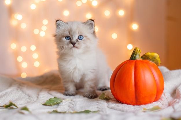 Kleines niedliches kätzchen, das neben einem kürbisherbst sitzt