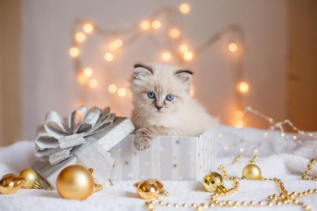 Kleines niedliches kätzchen in einer geschenkbox auf weihnachtsdekor