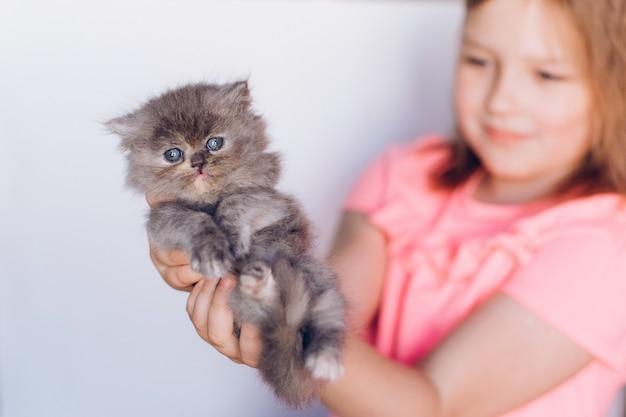 Kleines niedliches persisches hauskätzchen in der hand des mädchens