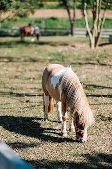 Kleines pferd im park, der gras easting ist
