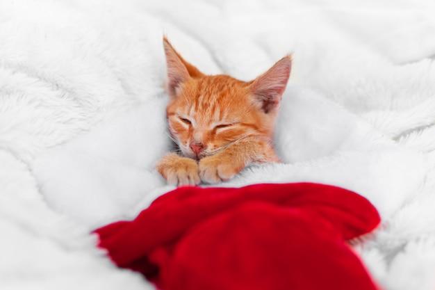 Kleines rotes babykätzchen liegt in der weihnachtsmütze auf einem sofa und schläft friedlich