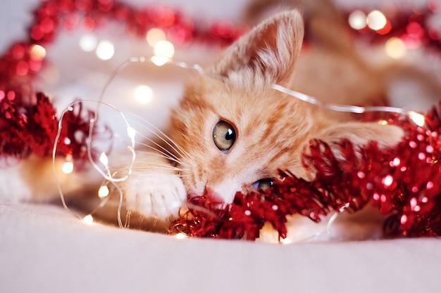 Kleines rotes kätzchen, das in den weihnachtsdekorationen spielt