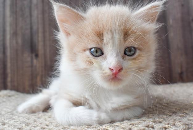 Kleines rotes kätzchen mit rosa nase liegt auf einer strickmatte.