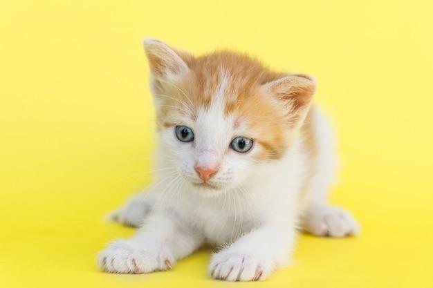 Kleines rotes kätzchen