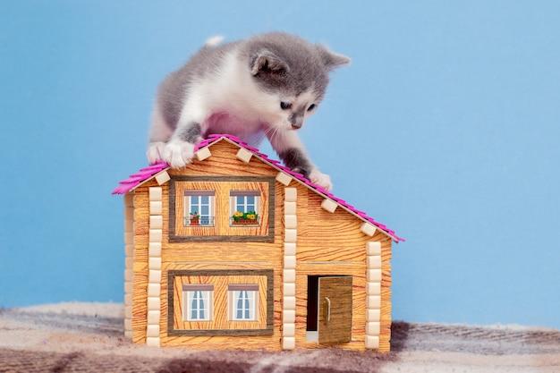 Kleines schönes kätzchen, das mit einem spielzeughaus spielt.