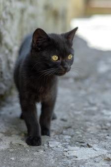 Kleines schwarzes kätzchen im schatten des hauses an einem heißen sommertag