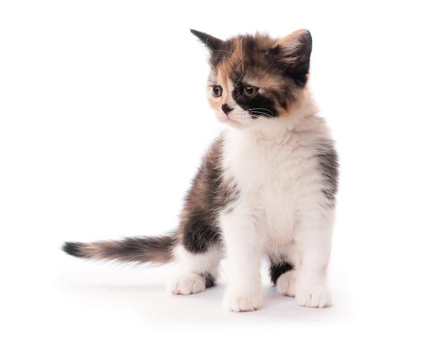 Kleines süßes kätzchen isoliert auf weißem hintergrund