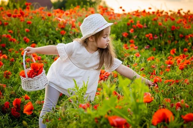 Kleines süßes mädchen mit einem korb mit blumenstrauß von mohnblumen steht in einem feld von mohnblumen, tschechische repablic