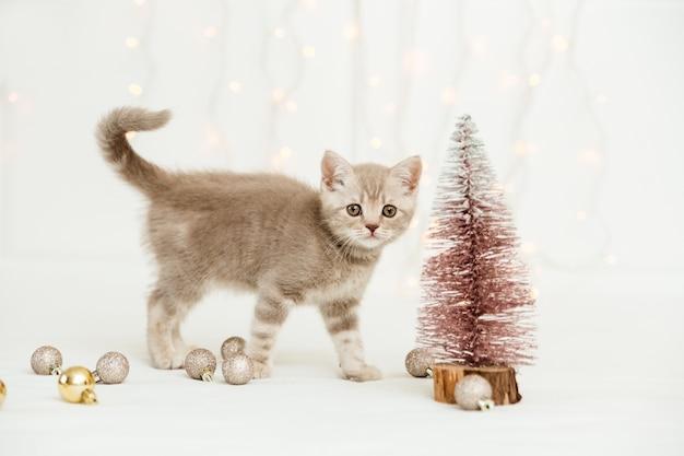 Kleines tabby graues kätzchen mit weihnachtsbaum. schottisch gerade. licht und weihnachtskugeln