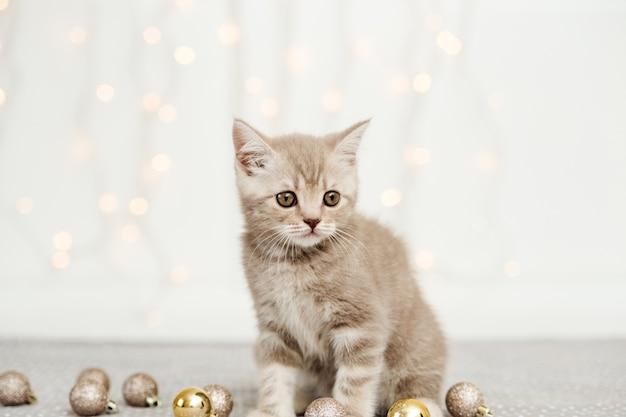Kleines tabby graues kätzchen. schottisch gerade. licht und weihnachtskugeln
