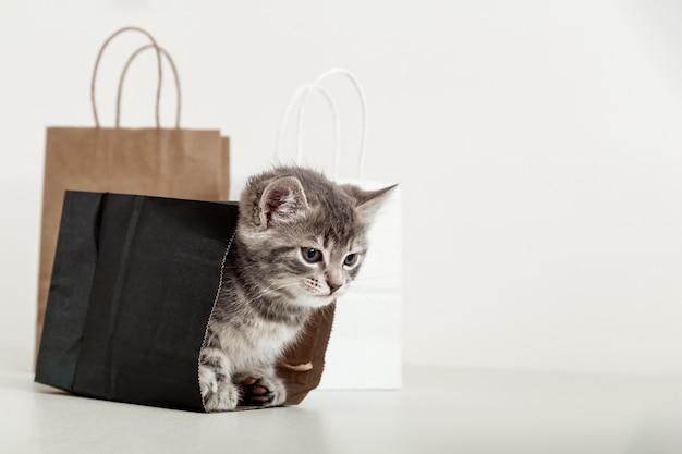 Kleines tabby-kätzchen versteckt sich in einer papiereinkaufstasche