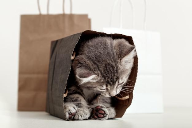 Kleines tabbykätzchen versteckt sich in einer papiereinkaufstasche. geschenk für frau am valentinstag kätzchen in paketüberraschung. verkauf kaufkonzept. katze in liefertaschen mit kopienraum auf weißem hintergrund.