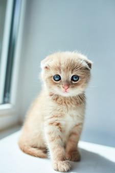 Kleines verspieltes kätzchen zu hause am fenster.