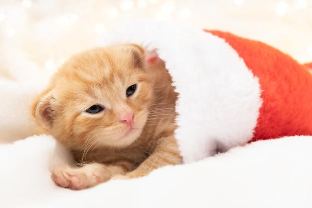 Kleines weihnachtsorangenkätzchen liegt süß und gemütlich in einer weihnachtsmütze weich und gemütlich