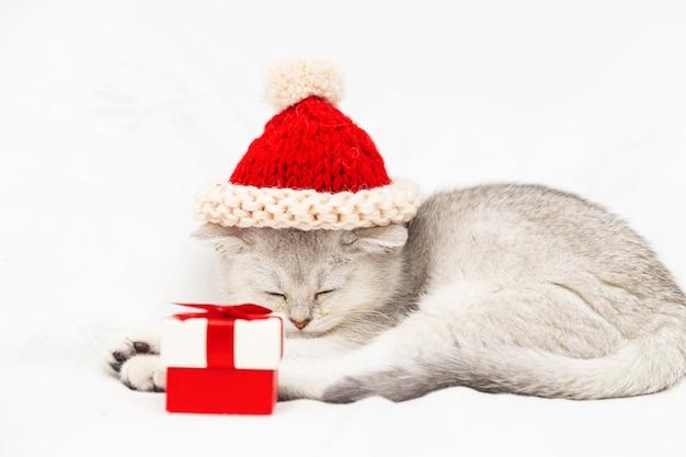 Kleines weißes britisches kätzchen in einem roten hut mit einer roten geschenkbox schläft auf einer weißen decke. lustiges neugieriges haustier. platz kopieren.