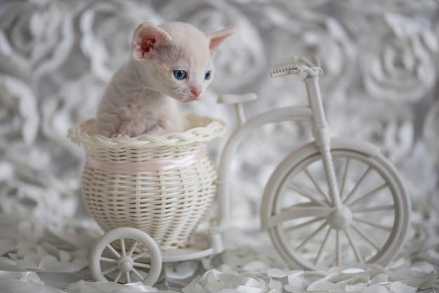 Kleines weißes kätzchen sitzt in einem dekorativen fahrrad