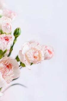 Kleines zartes weiß mit rosa rand-nelkenblumen auf einem weißen hintergrund, kopienraum