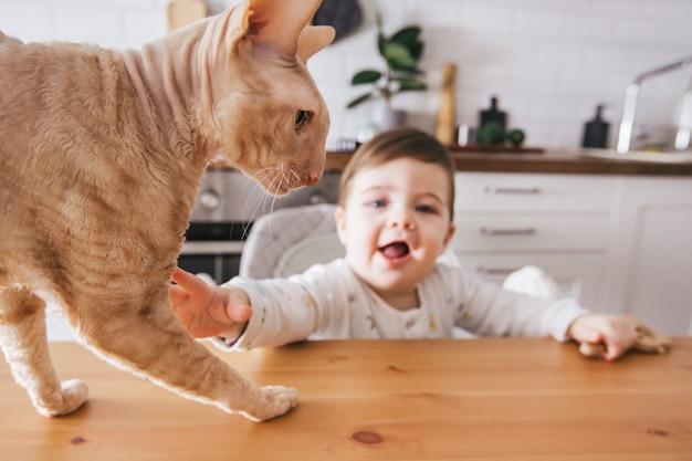 Kleinkindjunge, der mit roter katze auf weißem kücheninterier zu hause spielt