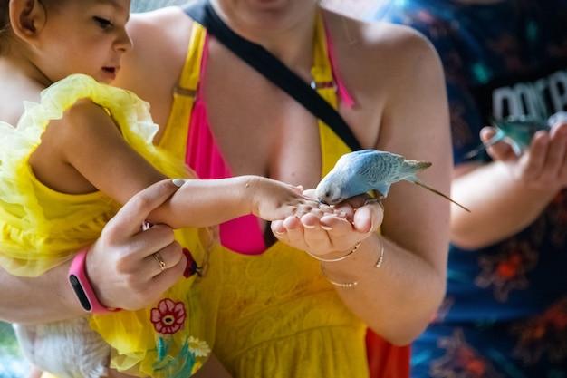Kleinkindmädchen sitzt in den armen ihrer mutter und füttert die papageien aus ihren händen nahaufnahme