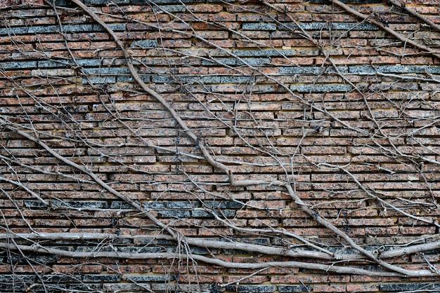 Kletterpflanzen mit trockenen beeren auf einer backsteinmauer. hintergrund