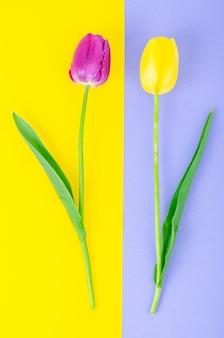 Knospen der bunten tulpen auf hellem hintergrund.