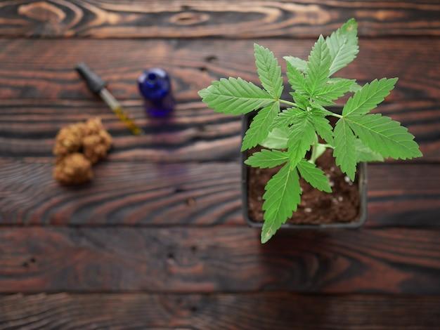 Knospen und marihuanaöl auf einem rustikalen tisch
