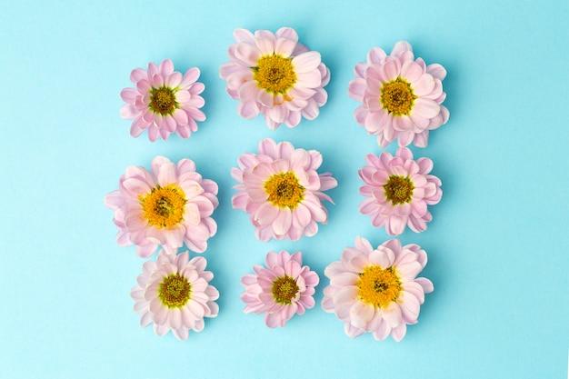 Knospen von rosa blüten mit rosa blütenblättern auf einem farbigen minimalen hintergrund. blumenhintergrundkonzept