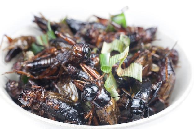 Knusprige gebratene insekten auf weißer schüssel