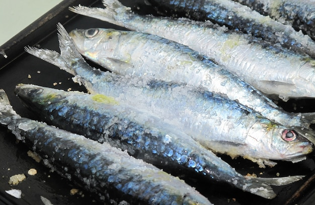 Kochen brachte kürzlich frisches sardinenmeer
