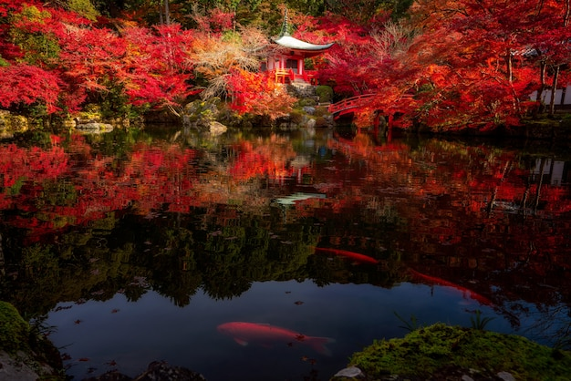 Koi-fisch im digoji-tempel