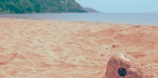 Kokosnuss an einem sandstrand am meer, sanfte tönung. reisen und tourismus. platz kopieren.