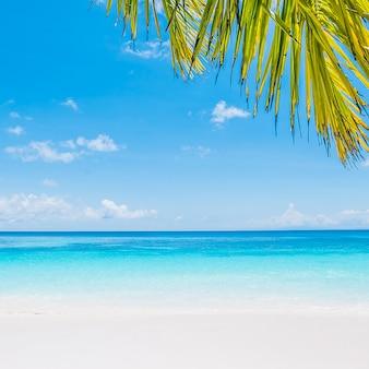Kokosnuss-palmblatt