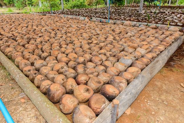Kokosnuss-parfüm ist schneidkopf für rassen