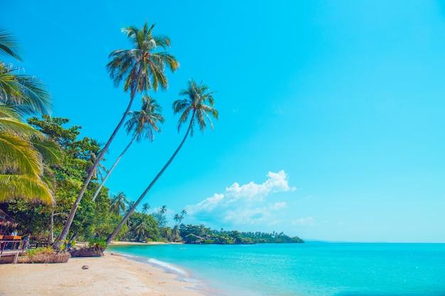 Kokosnussbäume an einem schönen strand an einem hellen himmel.