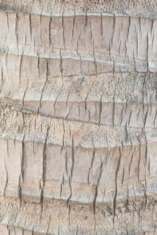 Kokosnussbaum-stamm-beschaffenheits-hintergrund