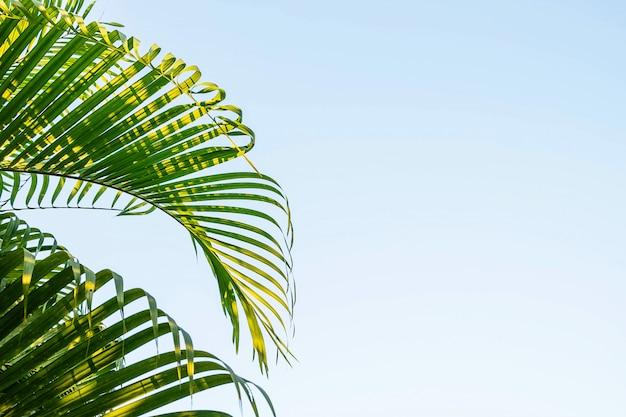 Kokosnussblätter und himmelhintergrund