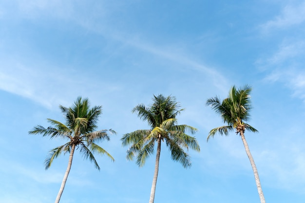 Kokosnusspalme-strandsommerkonzept