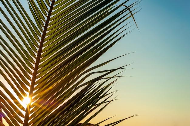Kokosnusspalme verlässt mit dem bunten himmel