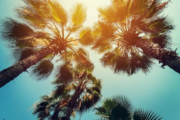 Kokosnusspalmen an der tropischen küste mit weinlese getönten und filmstil.