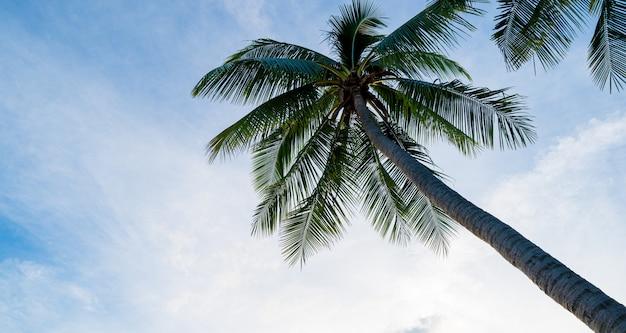 Kokosnusspalmen mit sonnenunterganghimmel und wolkensommerkonzepthintergrund.