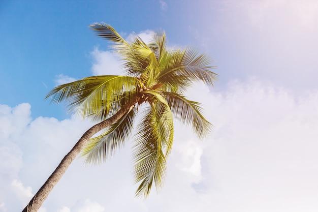 Kokosnusspalmen, schönes tropisches foto