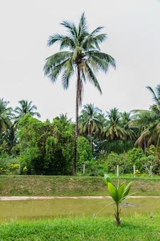 Kokosnusssprössling auf dem gras