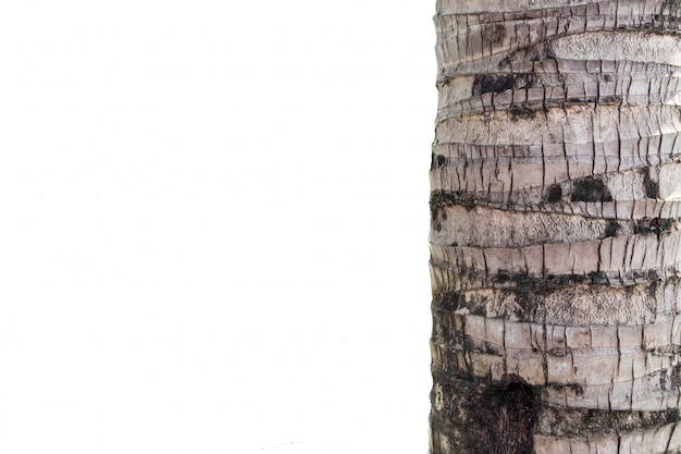 Kokosnussstamm auf weißem hintergrund