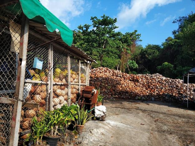Kokosölproduktion in einem asiatischen dorf. berge von kokosnussschalen auf dem fabrikhof.