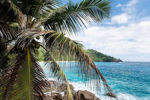 Kokospalme am felsigen ozeanstrand