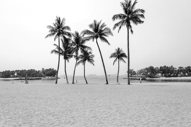 Kokospalmen am schönen strand. schwarz-weiß-filterton.
