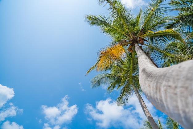 Kokospalmen am tropischen strand mit schönen blauen himmel