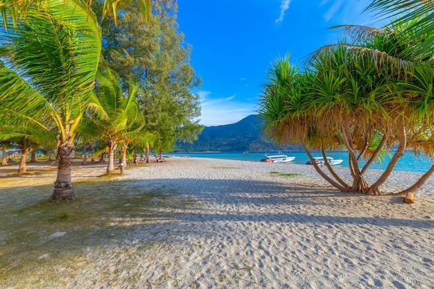 Kokospalmen auf weißem sandigem strand und blauem himmel im süden von thailand