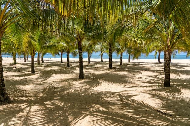 Kokospalmen auf weißem sandstrand nahe südchinesischem meer auf insel phu quoc, vietnam. reise- und naturkonzept