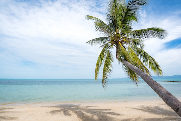 Kokospalmen erstrecken sich ins meer. bild des tropischen strandes, feiertag, ferien, erholung